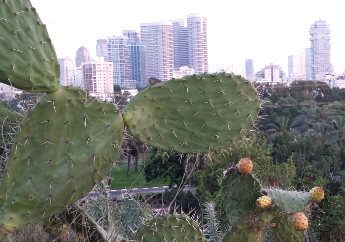 Biophilia: cactus and palms with the skyline of Tel Aviv in the background