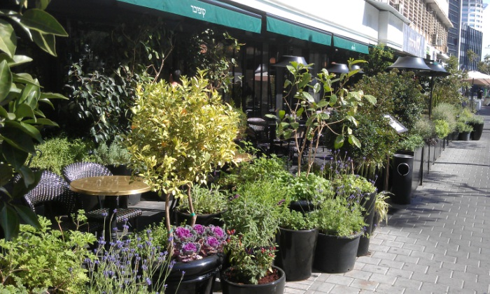 Biophilia in Tel Aviv - an abundance of plants at a row of pavement cafes