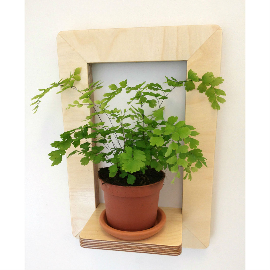 Marco Frame Shelf with plant from brightblueliving.com